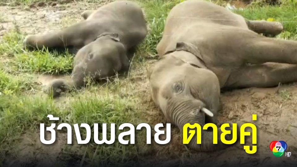 สลด!ช้างป่าถูกไฟช็อตล้ม2ตัว