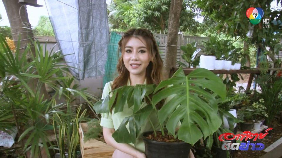 บัวบูชา พาเที่ยว : เทรนด์ปลูกต้นไม้ในบ้าน