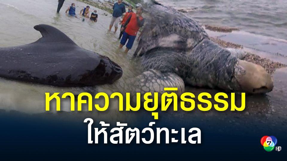 ครั้งแรกของโลก!พิสูจน์อัตลักษณ์ หาความยุติธรรมให้สัตว์ทะเล