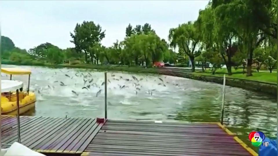เผยภาพฝูงปลากว่าร้อยตัว กระโดดขึ้นจากน้ำที่จีน