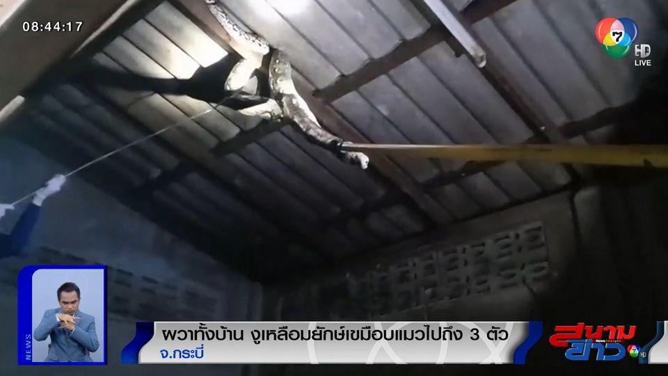 ภาพเป็นข่าว : ผวาทั้งบ้าน! งูเหลือมยักษ์ยาวเกือบ 6 เมตร เขมือบแมวไปถึง 3 ตัว