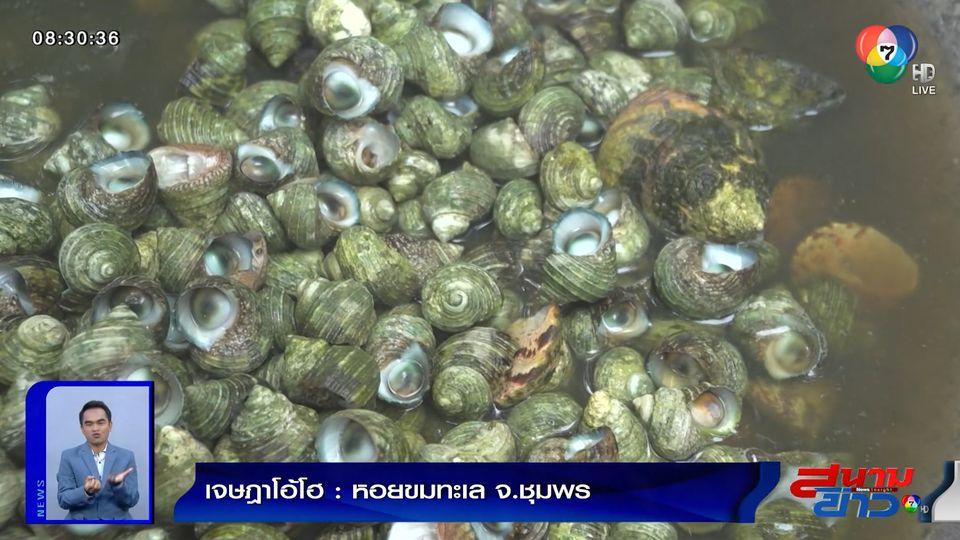 เจษฎาโอ้โฮ : หอยขมทะเล จ.ชุมพร