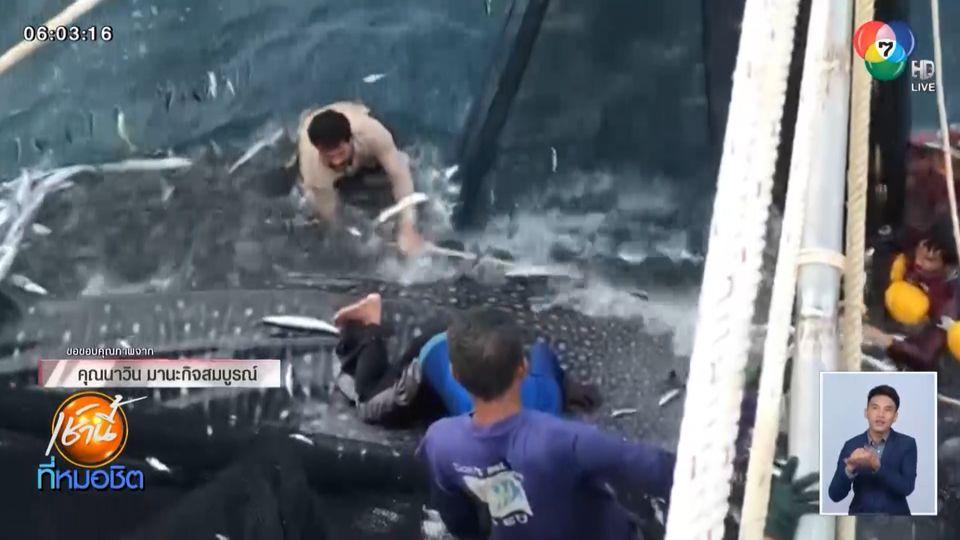 นาทีช่วยชีวิต ฉลามวาฬยักษ์พ่อแม่ลูก 3 ตัว ติดอวนประมงกลางทะเล