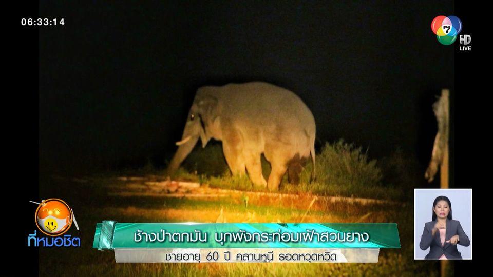ช้างป่าตกมัน บุกพังกระท่อมเฝ้าสวนยาง ชายอายุ 60 ปี คลานหนี รอดหวุดหวิด