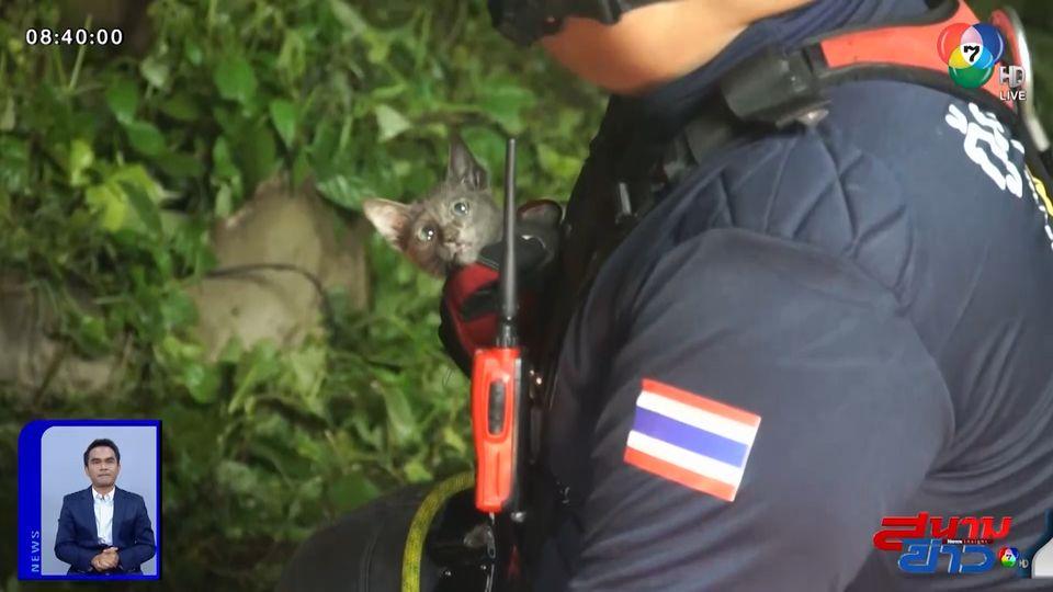 ภาพเป็นข่าว : ช่วยเหลือแมวน้อยตกบ่อน้ำบาดาลลึก 15 เมตร จ.เลย