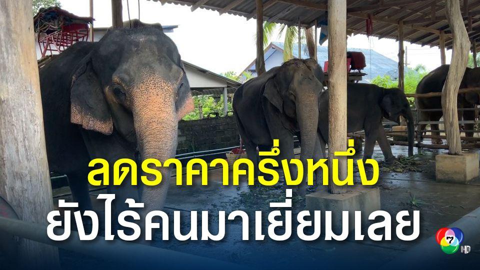 ปางช้าง อ.เกาะช้างซบเซา หั่นครึ่งราคาแต่ไร้คนเที่ยว