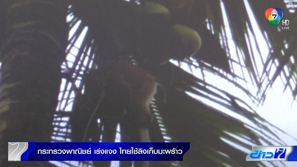 พาณิชย์เร่งแจงไทยใช้ลิงเก็บมะพร้าว เป็นวิถีชีวิตชาวบ้าน ไม่ใช่ทารุณกรรมสัตว์