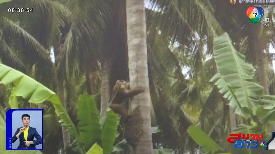 ภาพเป็นข่าว : พาณิชย์ แจงลิงเก็บมะพร้าวไม่ใช่ทารุณกรรมสัตว์