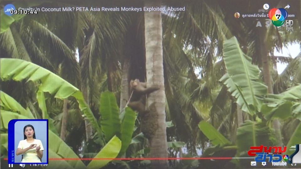 จับตาแก้ปัญหาลิงเก็บมะพร้าว หลัง PETA ชี้เป็นการทารุณกรรมสัตว์