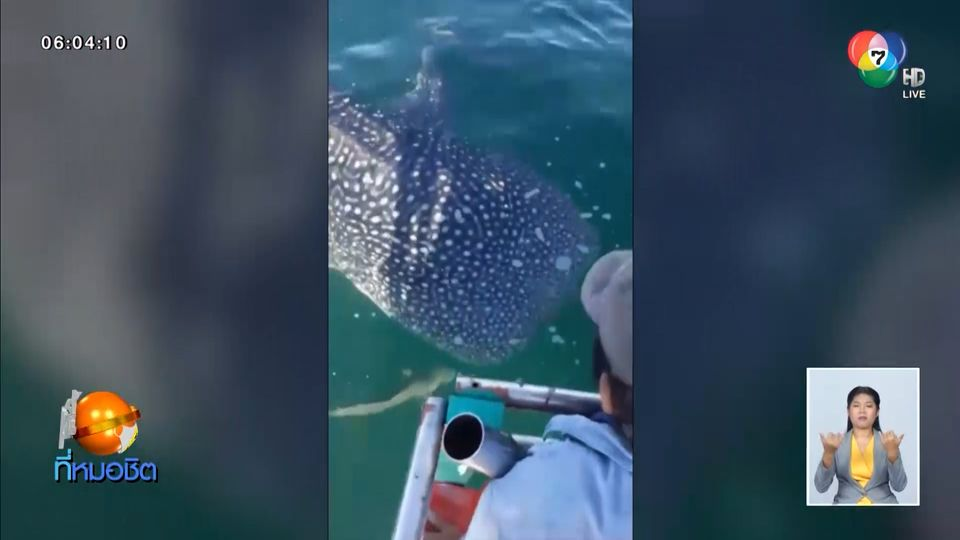 สุดประทับใจ พบฉลามวาฬโผล่ข้างเรือตกปลา กลางทะเลชะอำ จ.เพชรบุรี