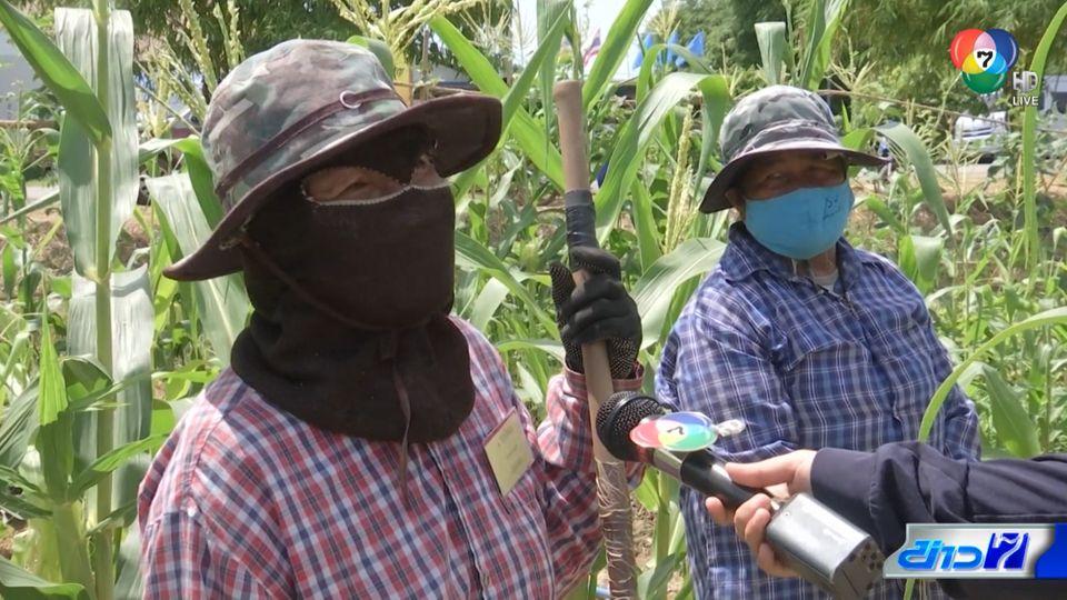 รายงานพิเศษ : ฟาร์มตัวอย่าง ช่วยคนตกงานจากโควิด-19