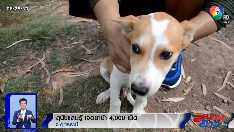ภาพเป็นข่าว : สุนัขแสนรู้ เจอยาบ้า 4,000 เม็ด ซุกข้างเสาไฟฟ้าริมทาง