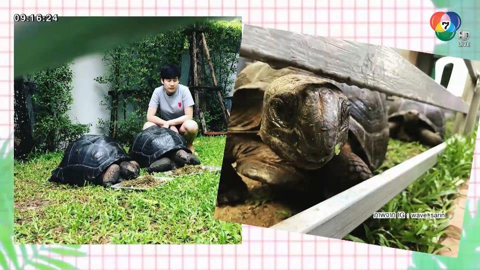 เวฟ วิภพ เผยภรรยาชอบเลี้ยงเต่า ชวนเพื่อนนักแสดงให้มาเลี้ยงด้วยกัน : สนามข่าวบันเทิง