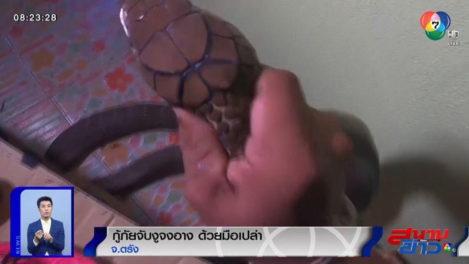 ภาพเป็นข่าว : ตื่นเต้น กู้ภัยจับงูจงอางด้วยมือเปล่า จ.ตรัง