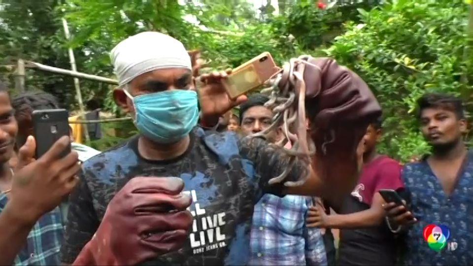 หมองูจับลูกงูเห่า 25 ตัว ไปปล่อย ที่อินเดีย