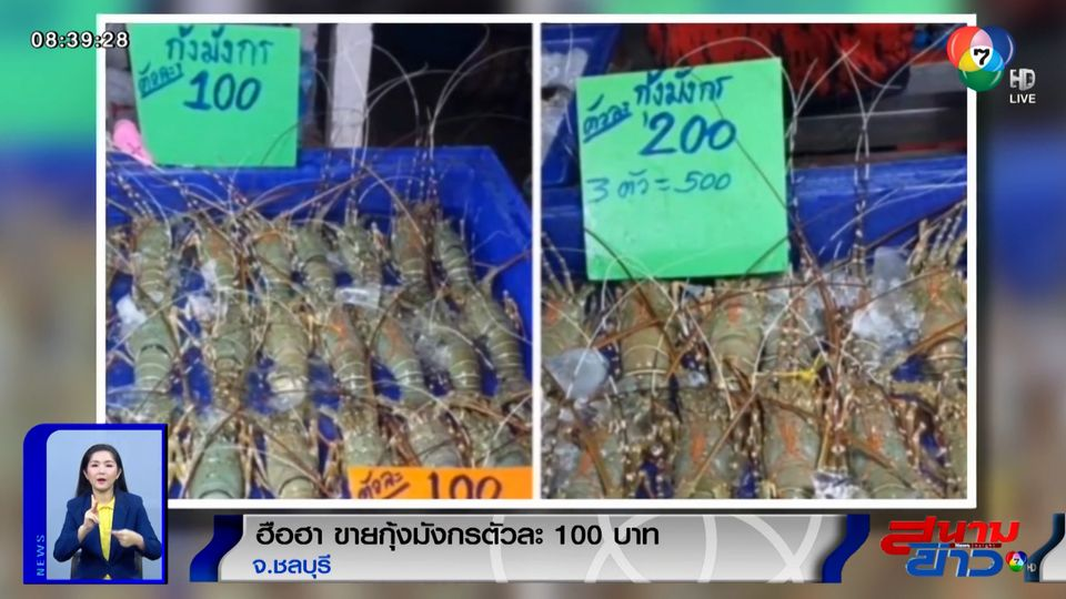 ภาพเป็นข่าว : ชาวเน็ตฮือฮา! ขายกุ้งมังกรตัวละ 100 บาท จ.ชลบุรี