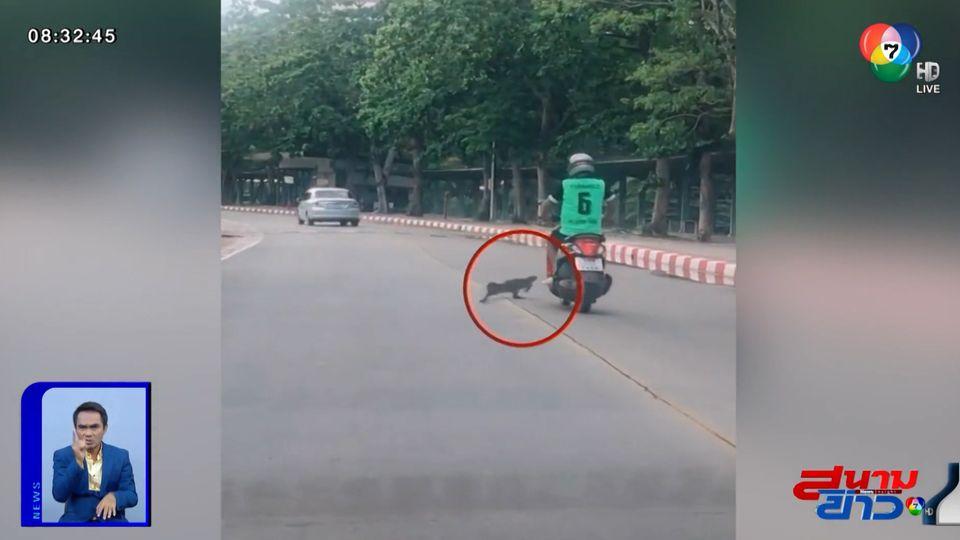 ภาพเป็นข่าว : สาวกรี๊ดสนั่น! ตัวเงินตัวทองวิ่งตัดหน้ารถ จยย.