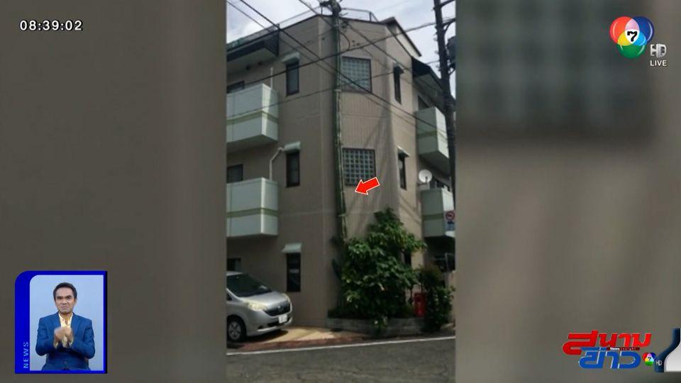 ภาพเป็นข่าว : ฮือฮา กระบองเพชรยักษ์ในญี่ปุ่น สูงกว่าตึก 3 ชั้น