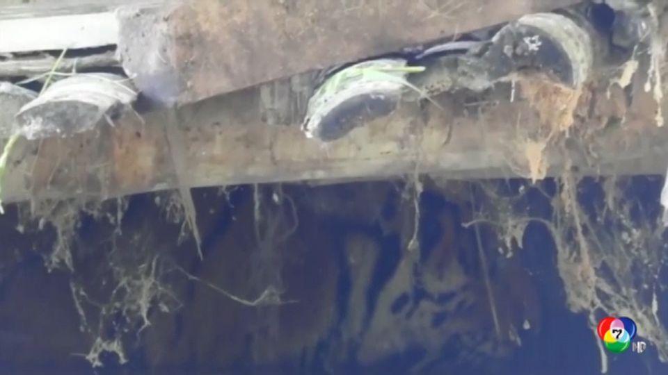 อินเดียเผยภาพเสือติดใต้สะพานจากเหตุน้ำท่วม-ดินถล่ม