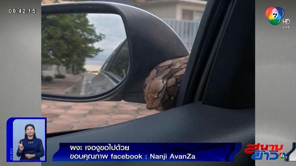 ภาพเป็นข่าว : เจ้าของรถผงะ! เจอแขกไม่ได้รับเชิญขอตามไปด้วย
