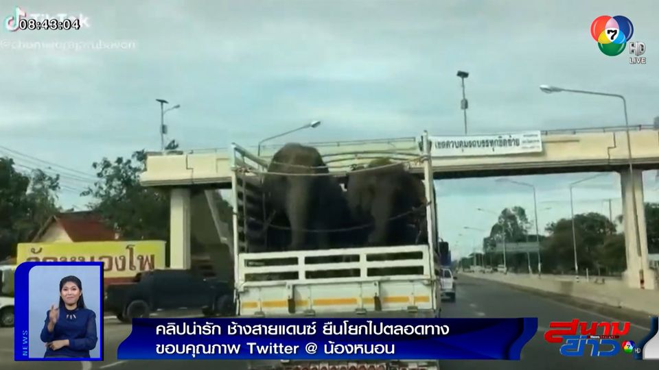 ภาพเป็นข่าว : คลิปน่ารัก ช้างสายแดนซ์ ยืนโยกไปตลอดทาง
