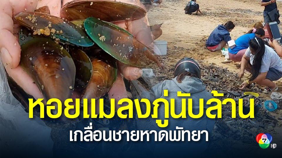 ชาวบ้านแห่เก็บหอยแมลงภู่นับล้านตัว ลอยเกลื่อนหาดจอมเทียน