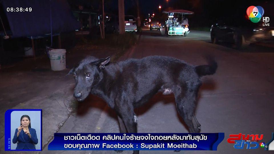 ภาพเป็นข่าว : ชาวเน็ตเดือด! คนใจร้ายจงใจถอยรถทับสุนัข