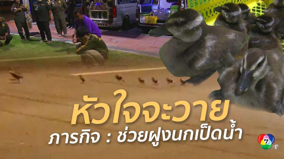 นาทีชีวิต ฝูงนกเป็ดน้ำวิ่งข้ามถนน หวิดโดนเหยียบ