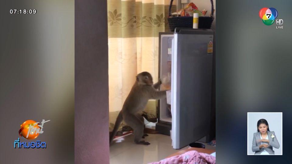 ลิงแสมสุดแสบ ดอดเข้าห้องพัก เปิดตู้เย็นหยิบของกินถุงใหญ่หน้าตาเฉย