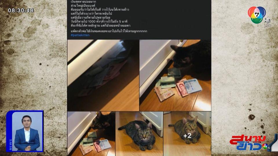 ภาพเป็นข่าว : แมวขโมยของจริง! หลักฐานชัด ฉกเงินซ่อนใต้เตียง