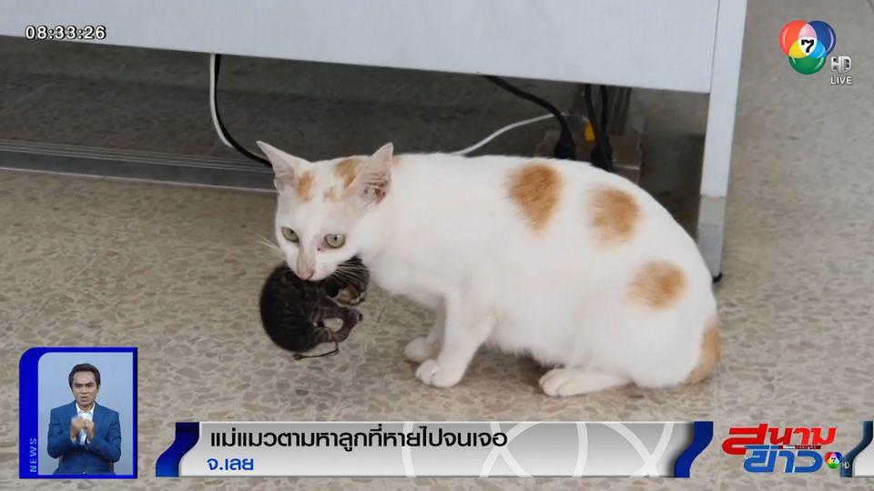 ภาพเป็นข่าว : แม่แมวตามหาลูกที่หายไปจนเจอ