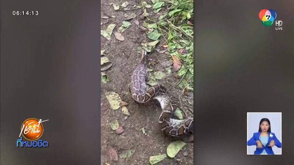 จับหัวขโมยกินไก่ คาหนังคาเขา ที่แท้งูเหลือมเขมือบหายกว่า 10 ตัว