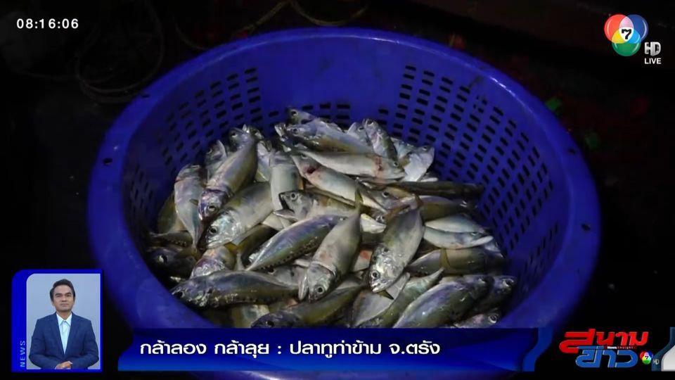 กล้าลองกล้าลุย : ปลาทูท่าข้าม จ.ตรัง