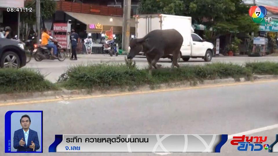 ภาพเป็นข่าว : ระทึก! ผู้ใช้รถแตกตื่น หลังพบควายหลุดวิ่งกลางถนน