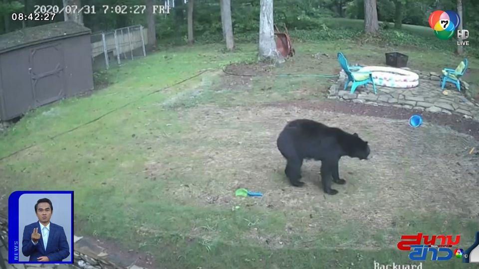 ภาพเป็นข่าว : แม่หมี สู้สุดตัว! ปกป้องลูกน้อยจากสุนัข