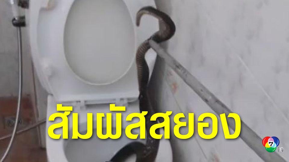 หนุ่มนั่งปลดทุกข์แทบช็อก งูเห่าโผล่ชักโครก