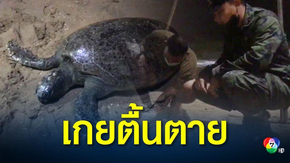 เต่าตนุเกยตื้นตายบนชายหาดจอมเทียน เจ้าหน้าที่เร่งชันสูตรหาสาเหตุการตาย