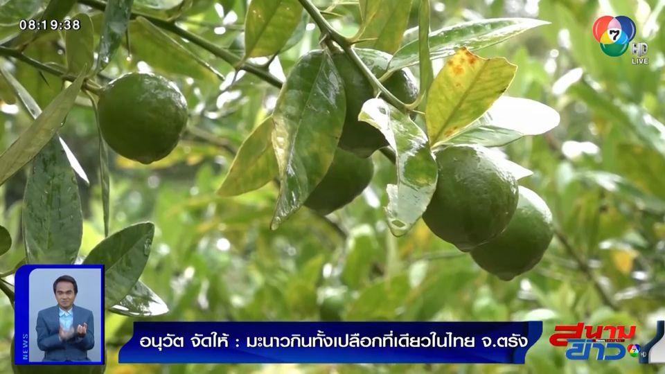 อนุวัตจัดให้ : มะนาวกินทั้งเปลือก ที่เดียวในไทย จ.ตรัง
