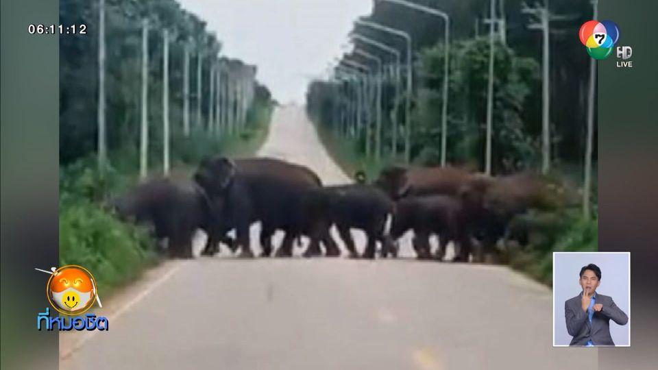 เตือนอันตราย ผู้ขับขี่ ระวังโขลงช้างป่า ข้ามถนนช่วงเย็น จนถึงเช้ามืด
