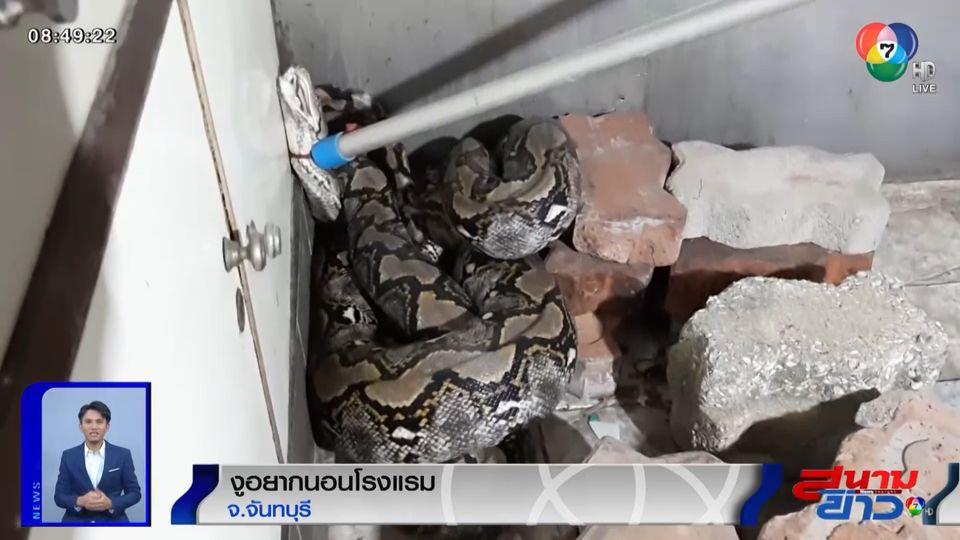 ภาพเป็นข่าว : แม่บ้านช็อก! งูเหลือมยาวกว่า 4 เมตร หนีฝน แอบเช็กอินนอนขดในห้องครัวโรงแรม