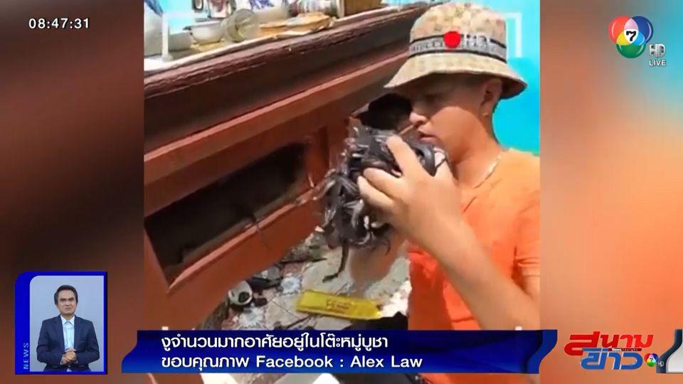 ภาพเป็นข่าว : สยอง! งูครอบครัวใหญ่อาศัยในโต๊ะหมู่บูชา