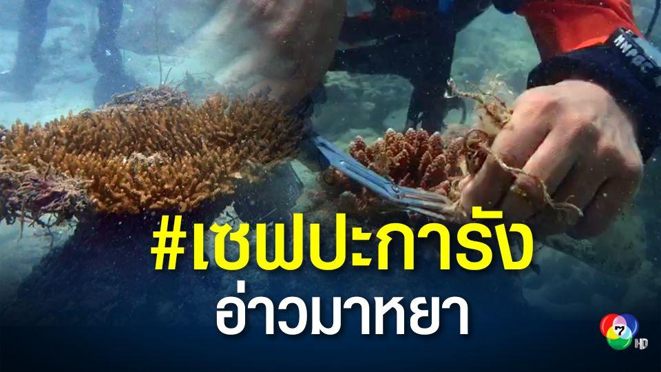 ปะการังอ่าวมาหยาใกล้ตาย ระดม จนท.เก็บขยะใต้น้ำ