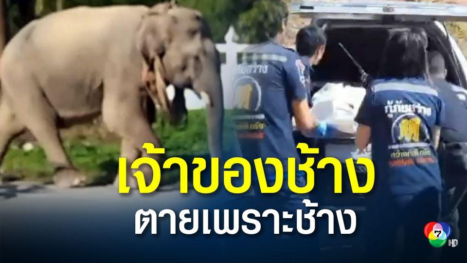 เจ้าของช้างถูกช้างที่่เลี้ยงไว้ ใช้งาแทงเสียชีวิต เหตุช้างพลายหวงช้างพัง