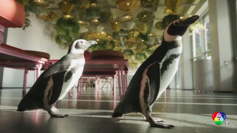 เพนกวินเดินสำรวจพิพิธภัณฑ์ศิลปะในนครชิคาโก ของสหรัฐฯ