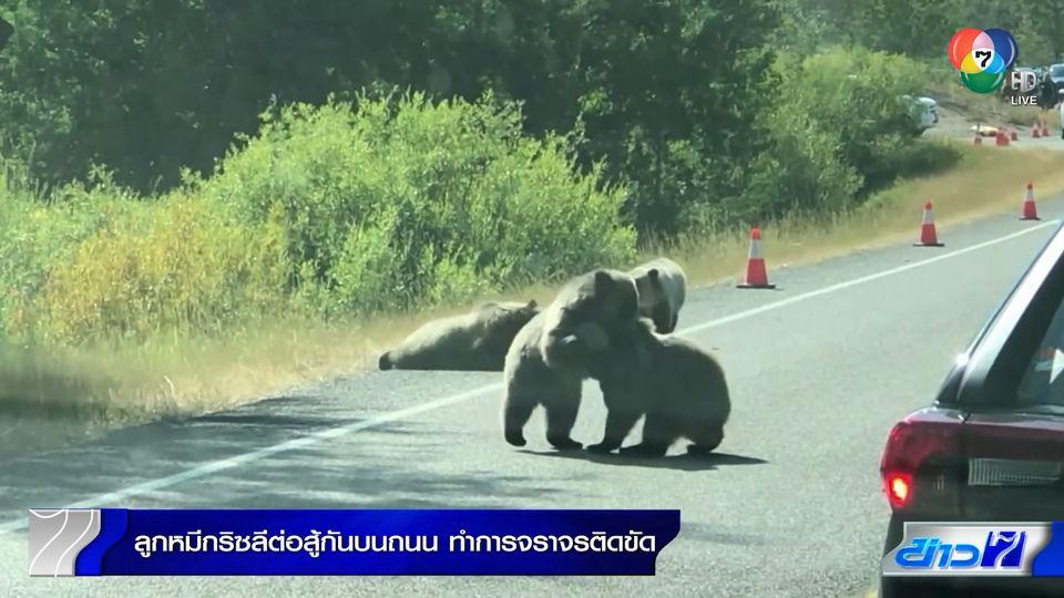 ลูกหมีกริซลีต่อสู้กันบนถนน ทำให้การจราจรติดขัดอย่างหนักในสหรัฐฯ