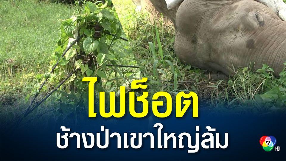 ชาวบ้านเศร้า! พบช้างป่าเขาใหญ่ถูกไฟฟ้าช็อตล้ม