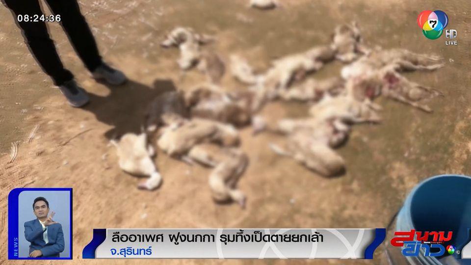 ลืออาเพศ ฝูงนกกา รุมทึ้งเป็ดพันธุ์บาบารี่ที่เลี้ยงไว้ ตายยกเล้า