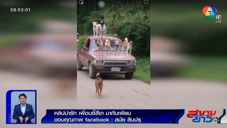 ภาพเป็นข่าว : มาเป็นแก๊ง! สุนัขยืนบนรถกระบะ พร้อมหน่วยลาดตระเวน