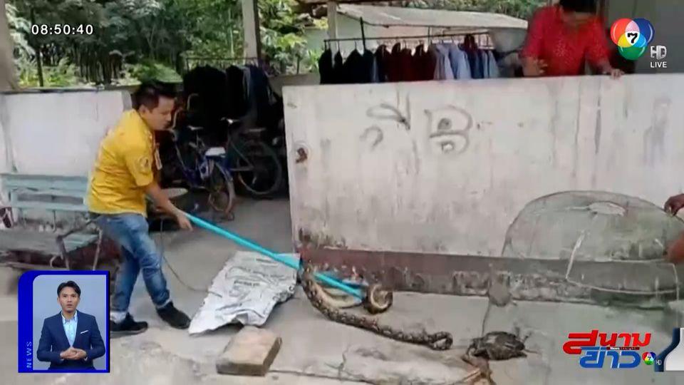 ภาพเป็นข่าว : งูเหลือมตัวเขื่อง บุกเขมือบไก่ชนตัวเก่ง จ.ชลบุรี