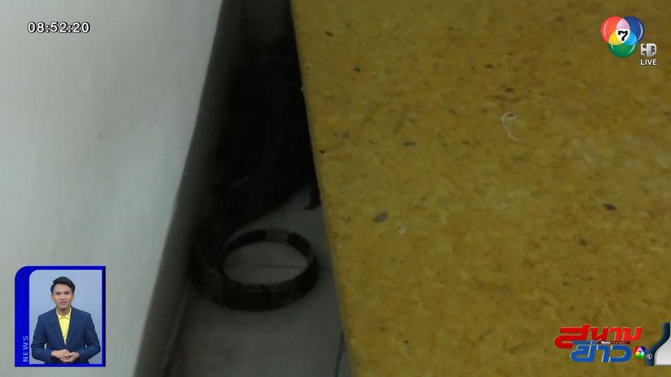 ภาพเป็นข่าว : ระทึก ตัวเงินตัวทองพังมุ้งลวด บุกร้านนวดแผนไทย คนในร้านหนีกระเจิง